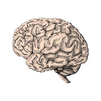 Cervello umano disegnato a mano