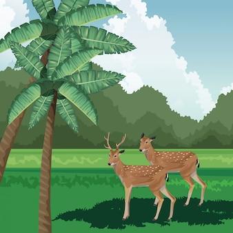 Cervi palme cespugli fauna tropicale e paesaggio flora