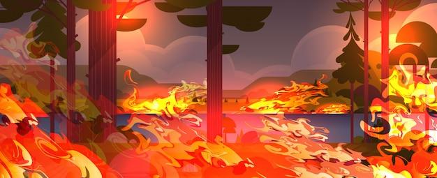 Cespuglio di incendi pericolosi sviluppo del fuoco boschi secchi bruciando alberi riscaldamento globale concetto di disastro naturale fiamme arancione intenso paesaggio orizzontale