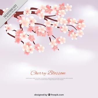 Cherry sfondo fiore con effetto sfumato