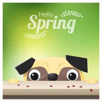 Ciao primavera sfondo con cane pug guardando le coccinelle