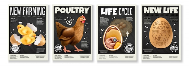 Ciclo di vita del pollo da allevamento avicolo allevamento di uccelli dallo sviluppo di embrioni di uova set di 4 manifesti realistici