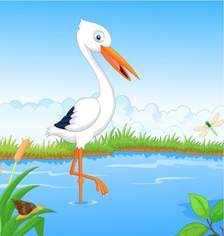 Cicogna bianca alla ricerca di cibo