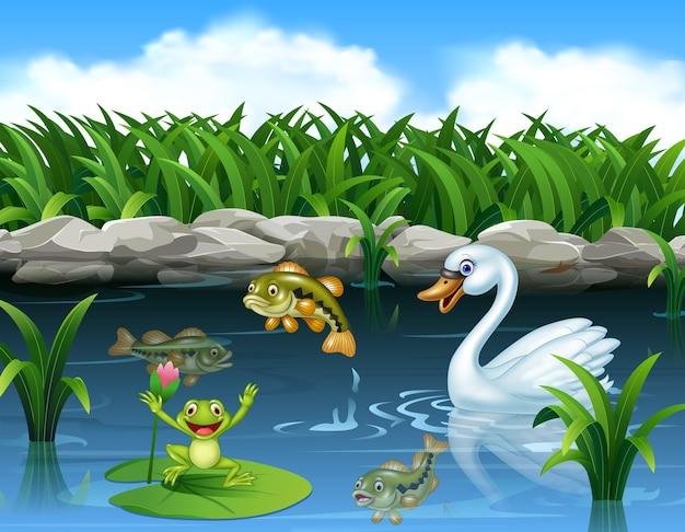 Cigno carino che nuota sullo stagno e sulla rana