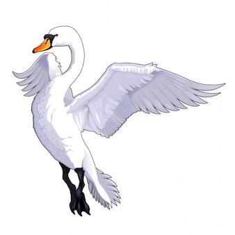 Cigno di volo di vettore isolato animale