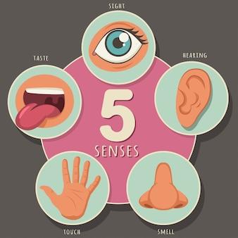 Cinque sensi di un essere umano: vista, udito, olfatto, gusto e tatto. icone del fumetto di vettore di occhi, naso, bocca, orecchio e mano isolati
