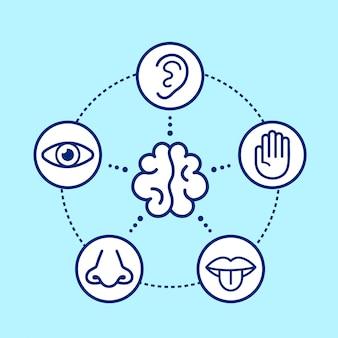 Cinque sensi umani che circondano il cervello.
