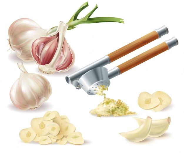 Clipart con testa d'aglio germogliato, chiodi di garofano sbucciati, fette tagliate e pressa di metallo