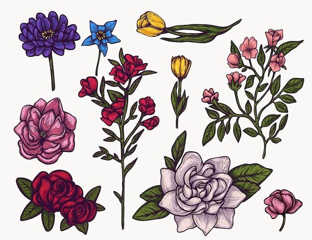 Clipart variopinto isolato disegnato a mano dei fiori della primavera. pianta in fiore elementi floreali per la progettazione grafica e i tuoi progetti creativi