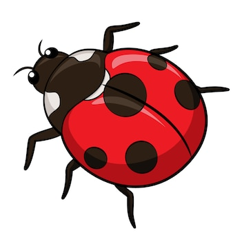Coccinella cartoon