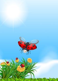 Coccinella che vola in giardino
