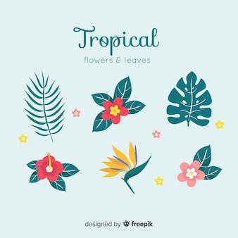 Collectio di foglie e fiori tropicali