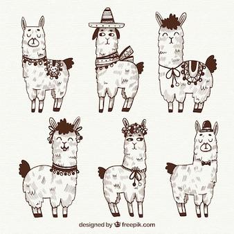 Collezione alpaca carino