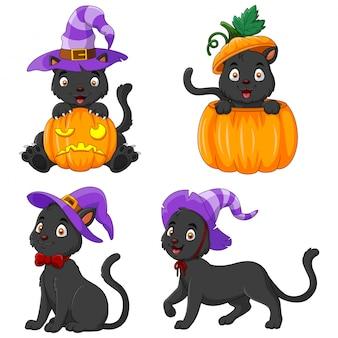 Collezione black cat con zucca