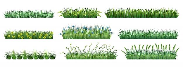 Collezione bordi di erba verde. erba verde fresca isolata. illustrazione vettoriale da utilizzare come elemento di design