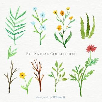 Collezione botanica acquerello