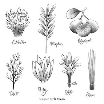 Collezione botanica disegnata a mano