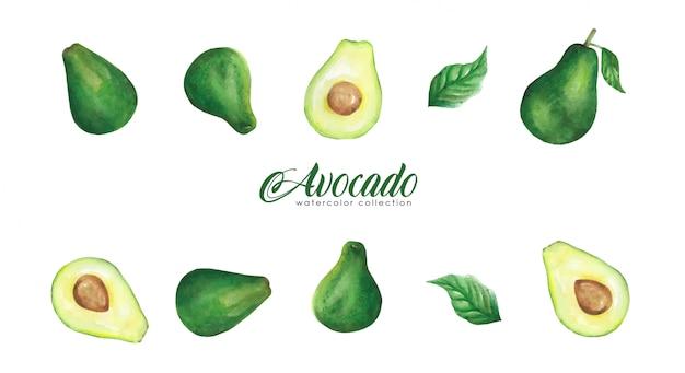 Collezione di acquerelli di avocado