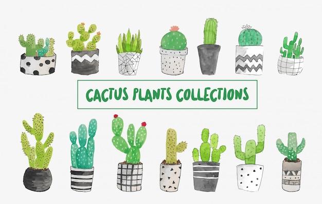 Collezione di acquerelli di cactus
