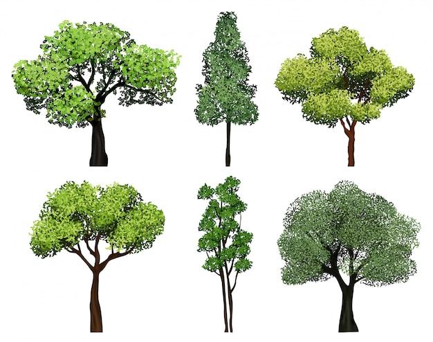 Collezione di alberi. piante verdi con immagini realistiche botaniche del giardino di ecologia delle foglie