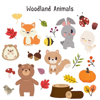 Collezione di animali del bosco.