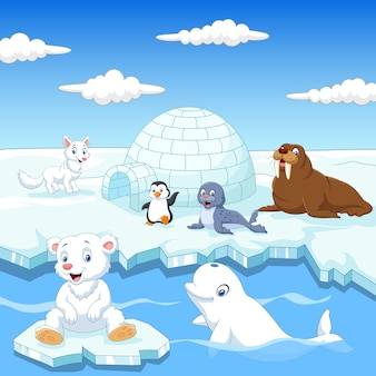 Collezione di animali dell'artico con ghiacciaia di igloo