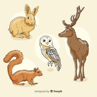 Collezione di animali della foresta di autunno disegnata a mano