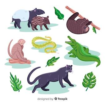 Collezione di animali esotici disegnati a mano