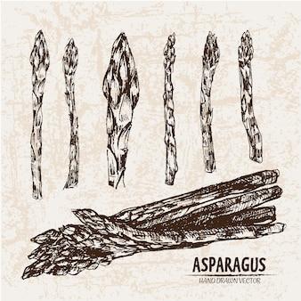 Collezione di asparagi disegnati a mano