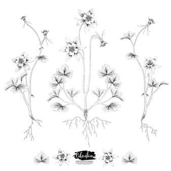 Collezione di botanica floreale schizzo