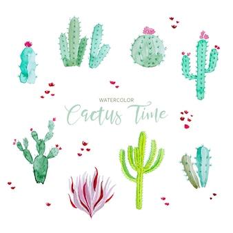 Collezione di cactus