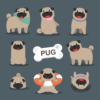 Collezione di cani pug