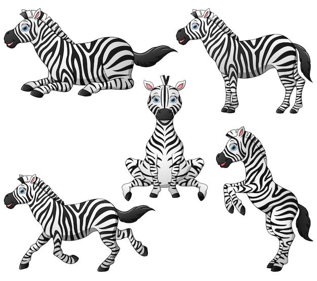 Collezione di cartoni animati zebra