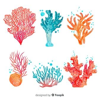 Collezione di corallo acquerello