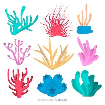 Collezione di corallo piatto