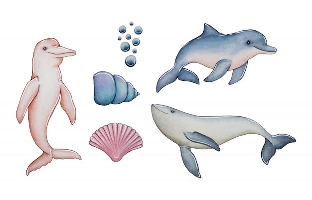 Collezione di delfini e conchiglie