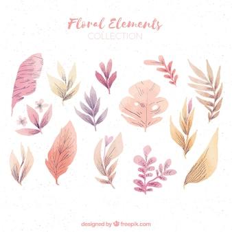 Collezione di elementi floreali dell'acquerello
