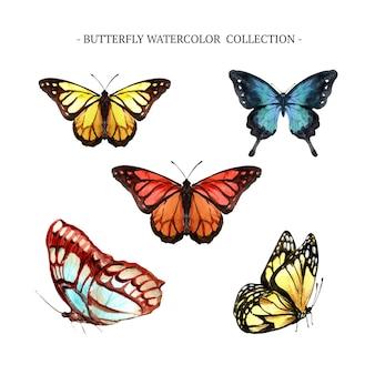 Collezione di farfalle con acquerello