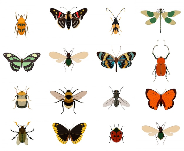 Collezione di farfalle e bug colorati