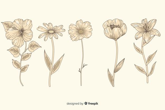 Collezione di fiori botanica vintage