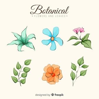 Collezione di fiori botanici dell'acquerello