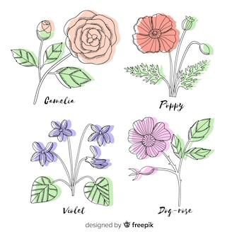 Collezione di fiori botanici disegnati a mano realistica con foglie