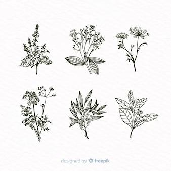 Collezione di fiori botanici disegnati a mano realistica