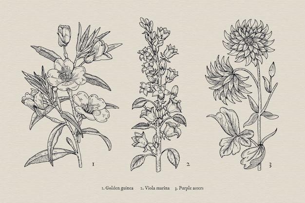 Collezione di fiori di botanica vintage disegnata a mano realistica
