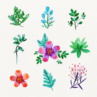 Collezione di fiori di primavera dell'acquerello