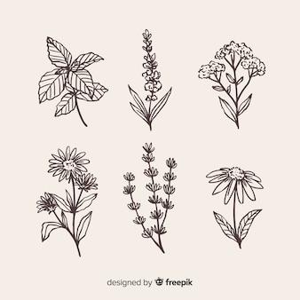 Collezione di fiori disegnati a mano realistica
