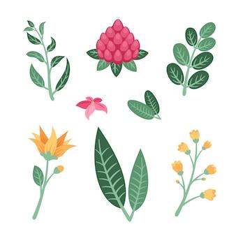 Collezione di fiori e foglie tropicali