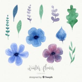 Collezione di fiori invernali acquerello