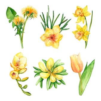 Collezione di fiori primaverili dell'acquerello