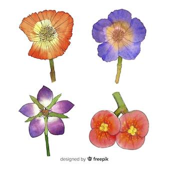 Collezione di fiori realistici dell'acquerello